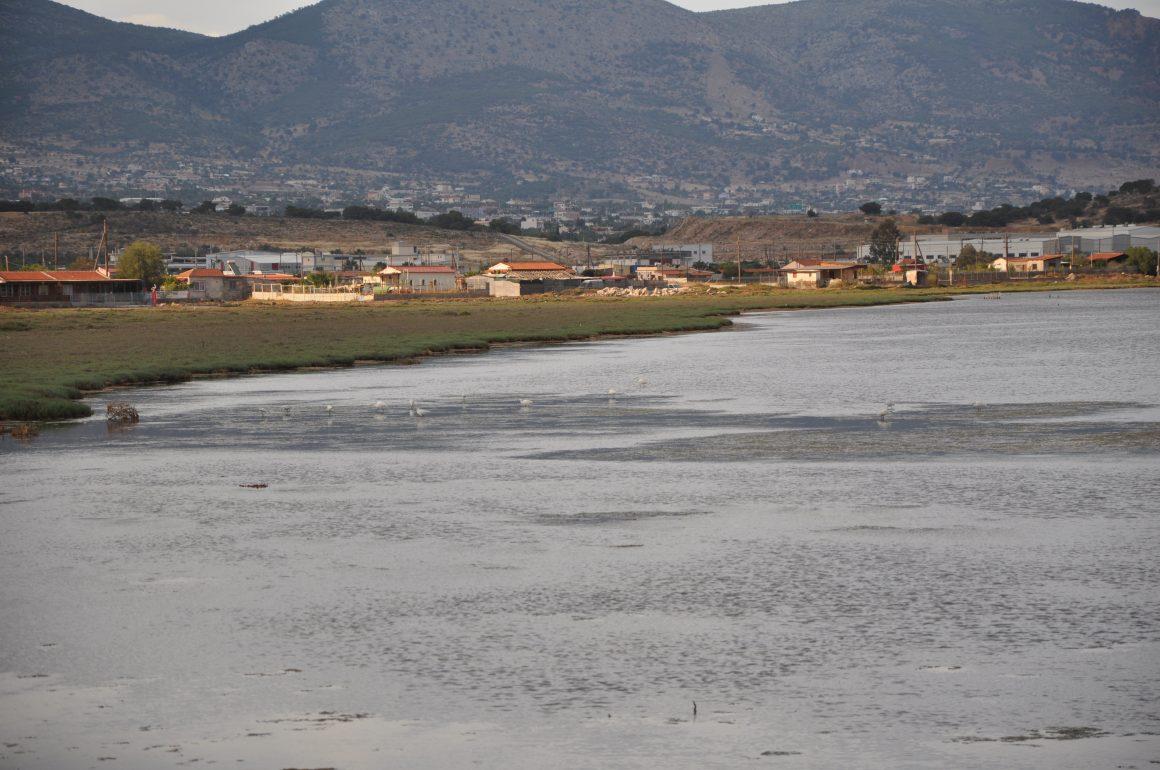 Coastal Marsh Vourkari Megara
