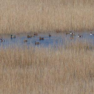 Coastal Wetland Schinias Marathon