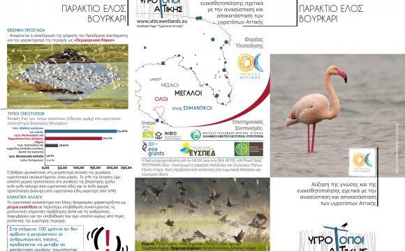 Leaflet – Coastal Marsh Vourkari Megara